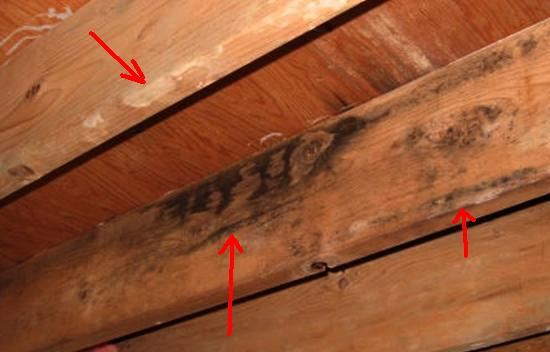 Black Mold On Wood Beams